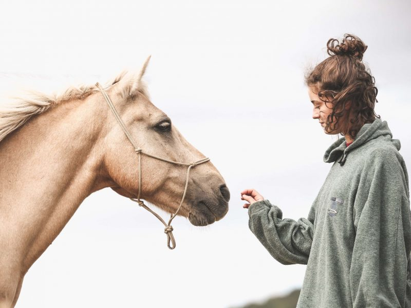 Equithérapie-Mediation-Animale