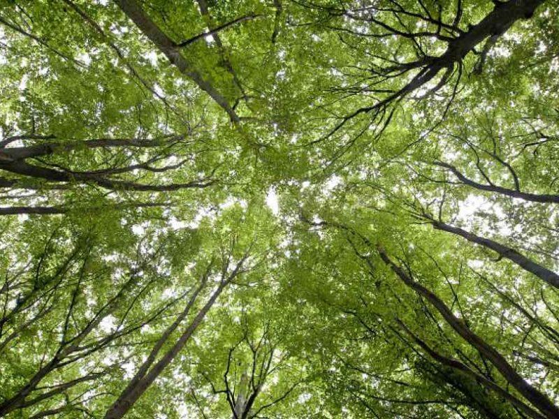 Forêt-canopée