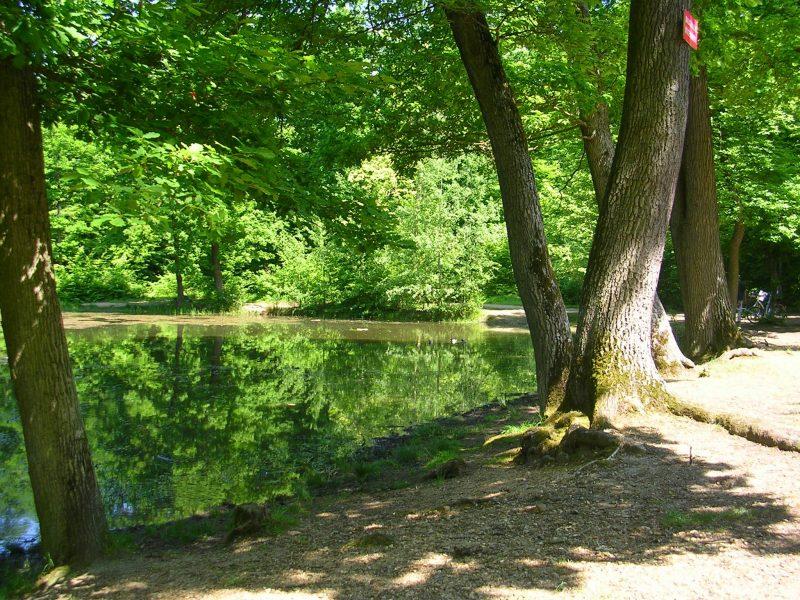 Forêt-étang